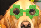 specsavers_and_balbriggan_branch_of_irish_guide_dogs_for_the_blind_3