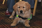 guide_dogs_volunteer_night_balbriggan_02mar12_smaller