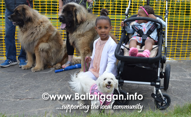 balbriggan summerfest pet show 04jun17_13