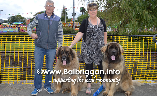 balbriggan summerfest pet show 04jun17_14