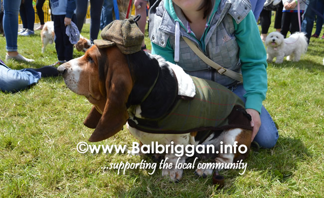 balbriggan summerfest pet show 04jun17_5