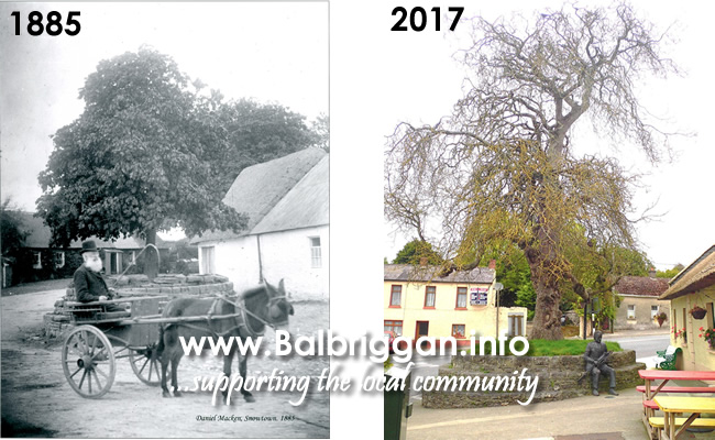 The Naul Chestnut Tree 1885 and 2017