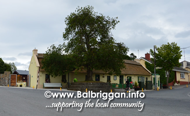 The Chestnut Tree in Nual Village