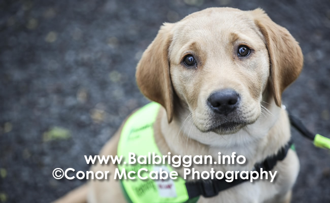 Irish Guide Dog Day 2019_2
