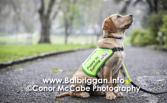 Irish Guide Dog Day 2019_3