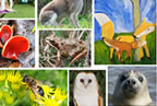 Fingal County Council launch Activities in Nature Competition smaller